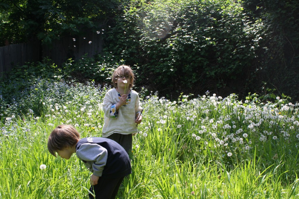 "small children blowing dandelion ""wishes"""