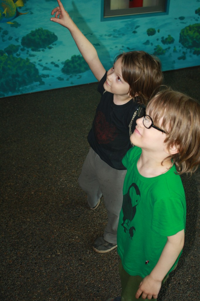 Númenor and Ithilien looking up at an exhibit at the aquarium